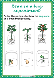 how-to-grow-a-bean-in-a-bag